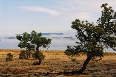 Above the fog in Northern New Mexico.