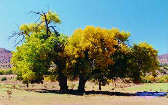 Photo of trees changing color