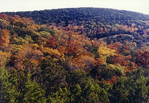 Hillside of colors