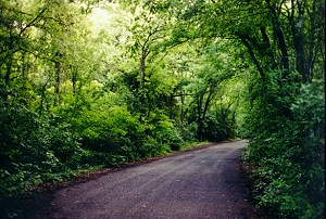 A covered road near Austin, Texas