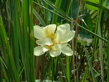 hidden flower revealed