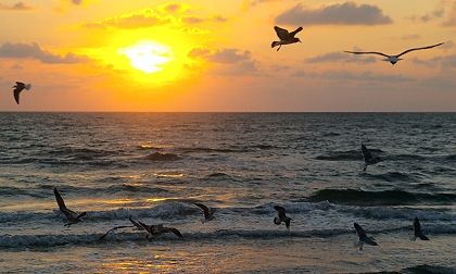 Gulls at sunrise at South Padre Island, Texas
